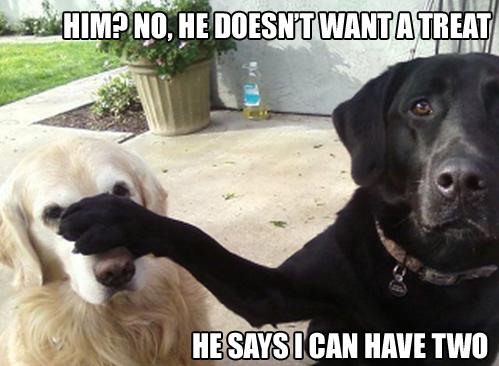 68656222 slimme hond